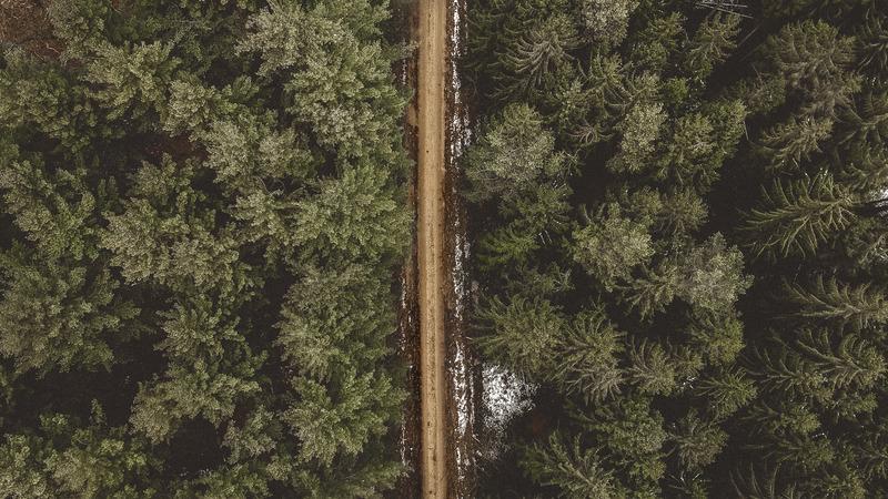 Wald aus Vogelperspektive